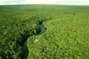 floresta-regenerada-absorve-11-vezes-mais-carbono-que-mata-virgem-na-amazonia